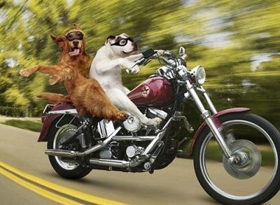 biker_dogs.jpg